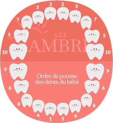 Poussée dentaire ordre
